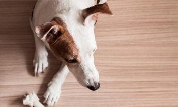 Piso laminado e pets: dicas e cuidados necessários